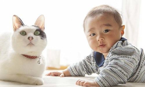 ペット写真の撮影例